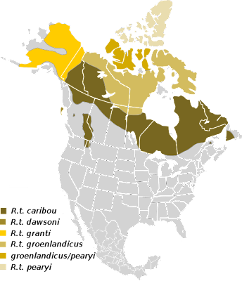 external image 515px-Rangifer_tarandus_Map_NA_svg+caribou+wikipedia.png