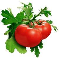 Tomato Useful to Lower Cholesterol