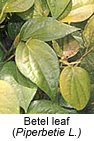 betel leaf cure Mouth Sores