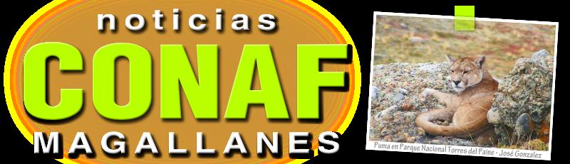 Noticias CONAF Magallanes