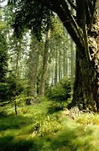 Scottish Native Trees