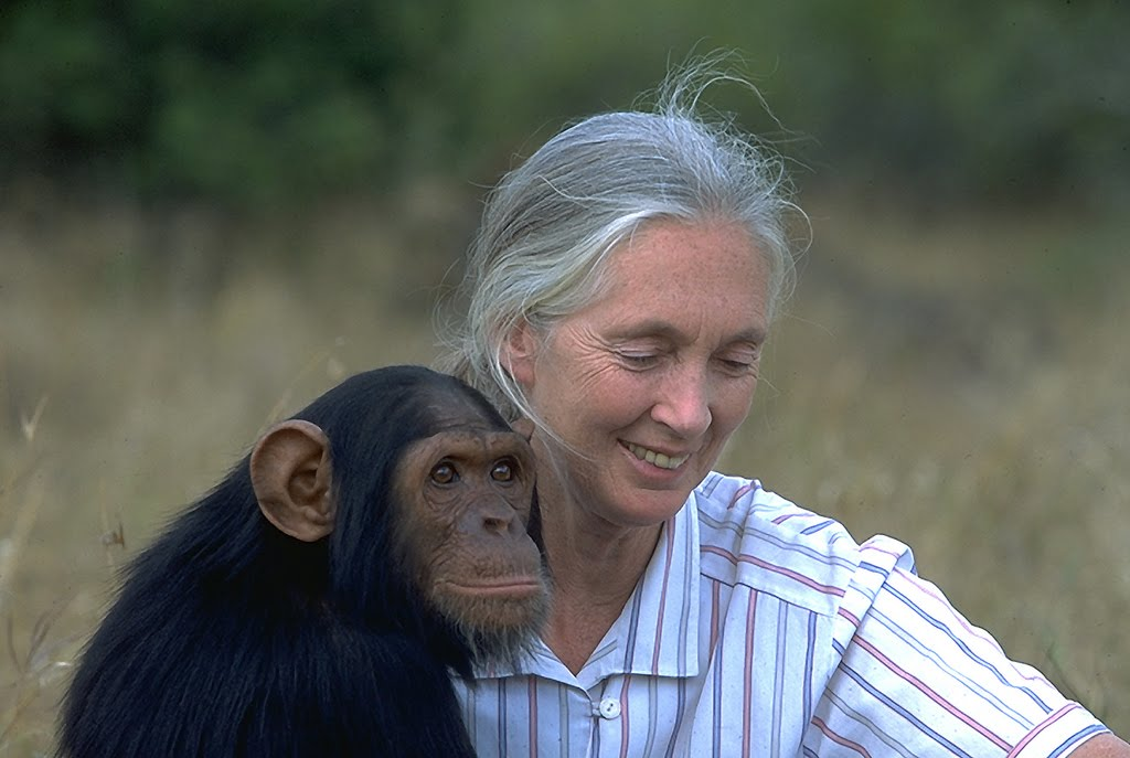 jane goodall is one of the