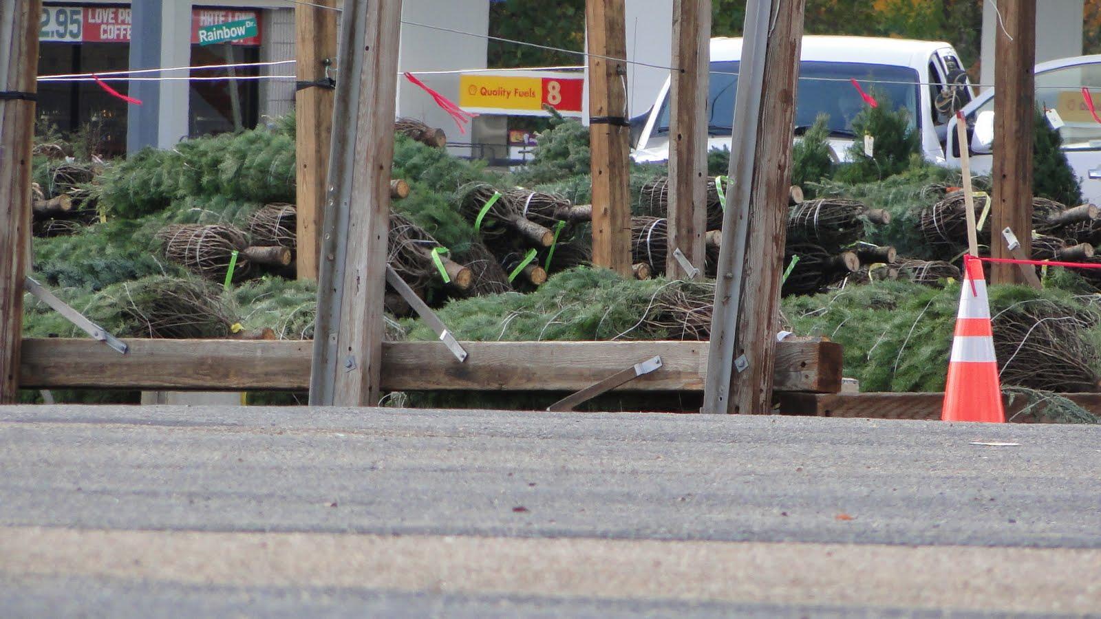 http://4.bp.blogspot.com/_xEw_wnCvE_0/TPAczq-r51I/AAAAAAAAJlg/O_-pc89Lq_Q/s1600/commercial_christmas_trees_24november2010.jpg