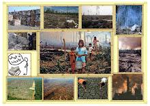 Quand  arrêterons nous  la déforestations ?.