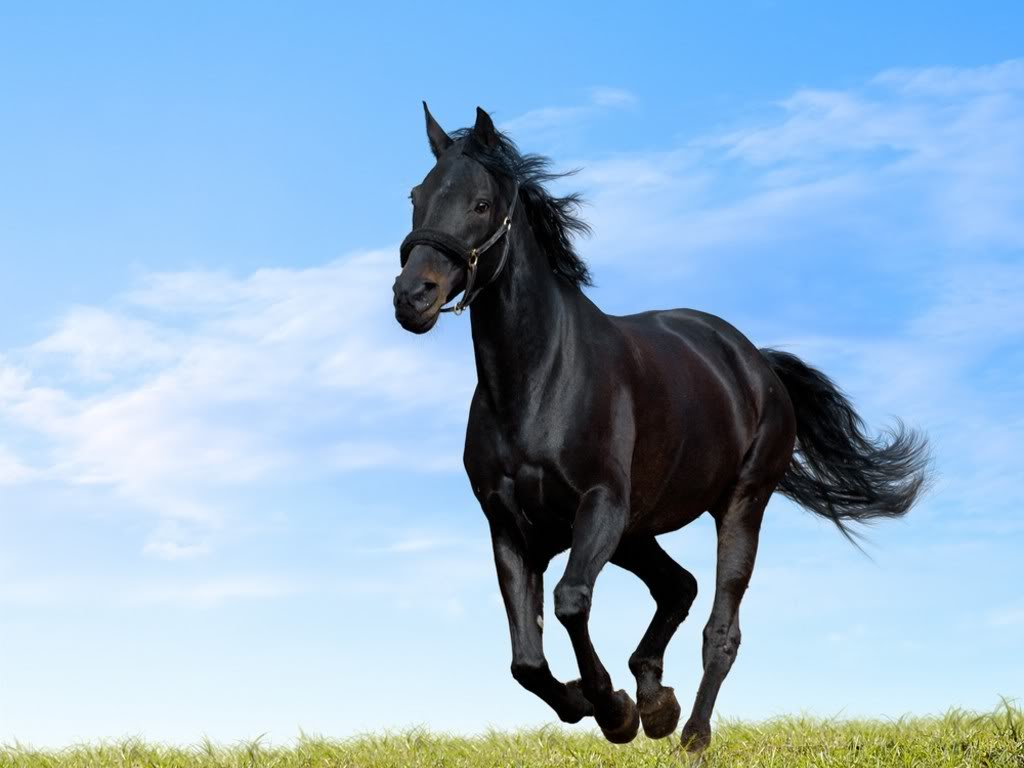 Free You Black Horse Running Green Meadow