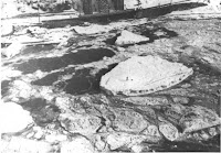 Ice bridge tragedy. The speck on the largest cake of ice is Burrell Hecock. – Niagara Fall (Ontario) Public Library