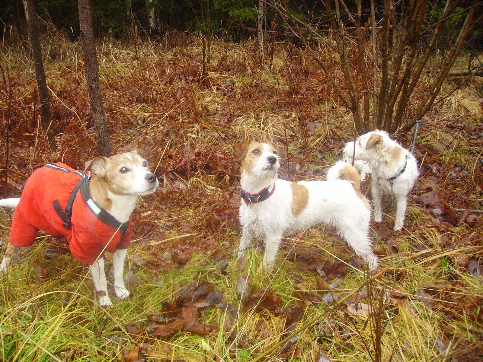 Blogissa  seikkailevat koirat:
