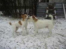 Cosmo ja Emmi