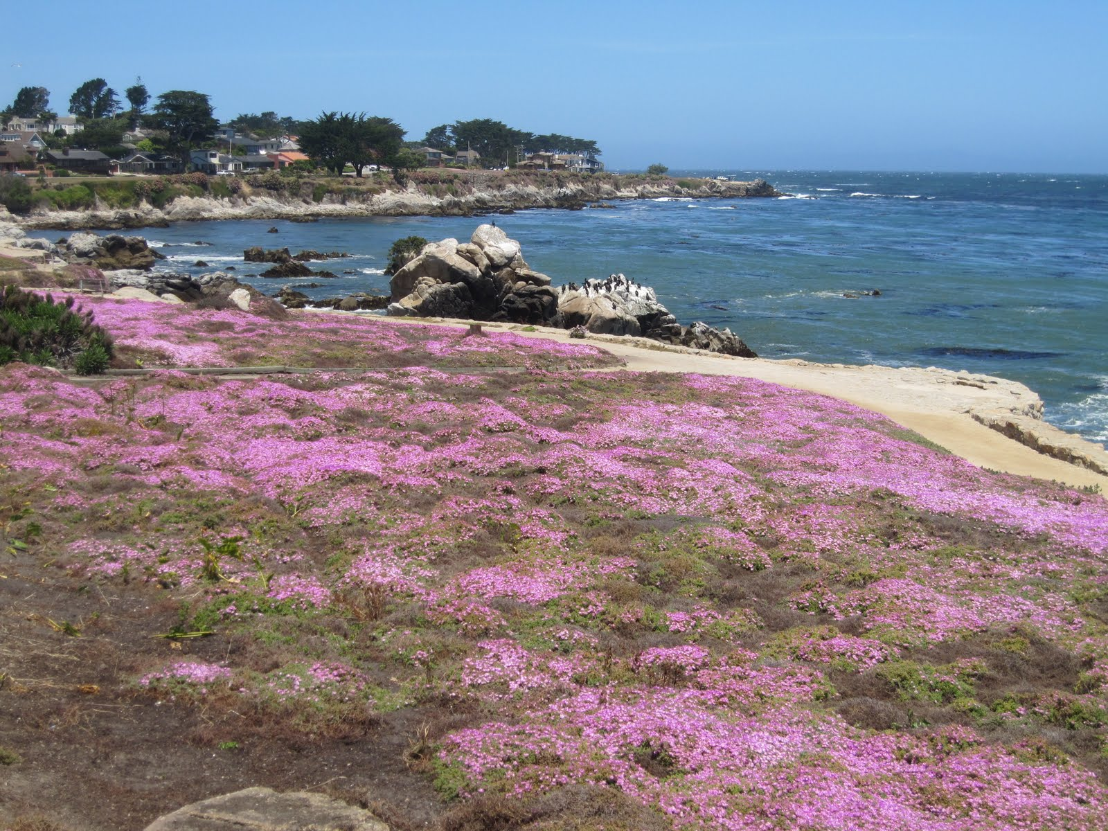 Ca Legacy Plate >> Ken B Travels: Summer residence in Pacific Grove