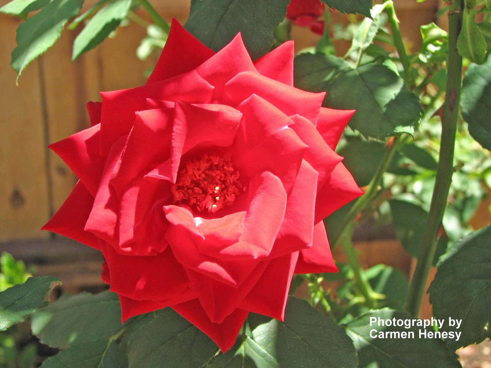 Carmen 39 S Chronicles Flowers On Saturday 8 November 13
