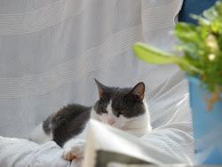 Cat 2 - Storm