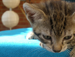 Cat 4 - Mouse