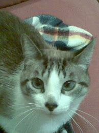 Gatín, nuestro galán casero