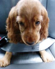 Peanut, the Good Dog Citizen.