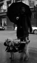 Un libro, un perro, un paraguas