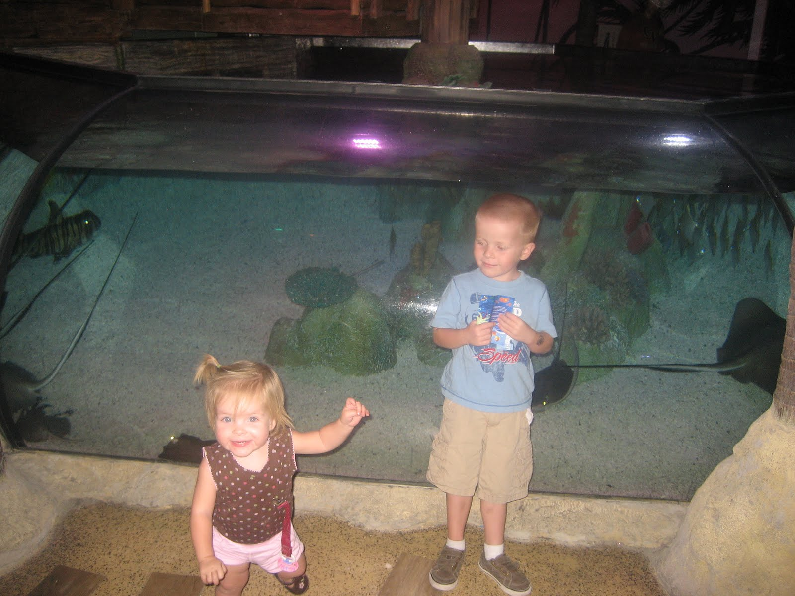 The crazy cramers arizona mills sea life aquarium Arizona mills mall aquarium
