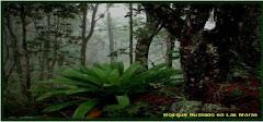 Bosque Nublado Las Moras