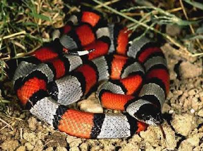 mi mujer follada por serpiente