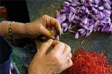 émondage des fleurs pour en extraire les 3 stigmates