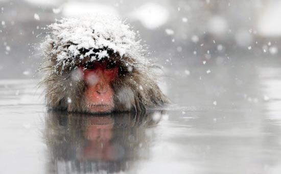BRRRRRR ... speriamo che almeno io riesca a riscaldarvi un pochino ... ;-)