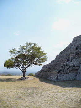 Árbol y Pirámide