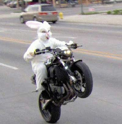 bunny on a motorcycle