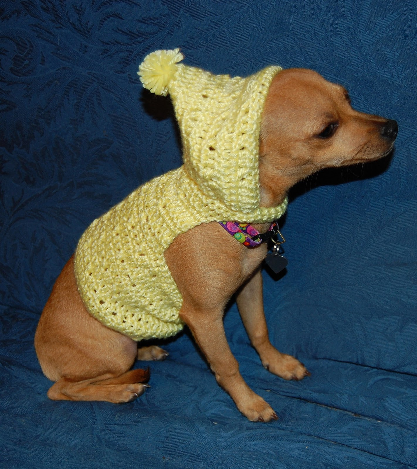 CHIHUAHUA SWEATER CROCHET PATTERN – Crochet Patterns