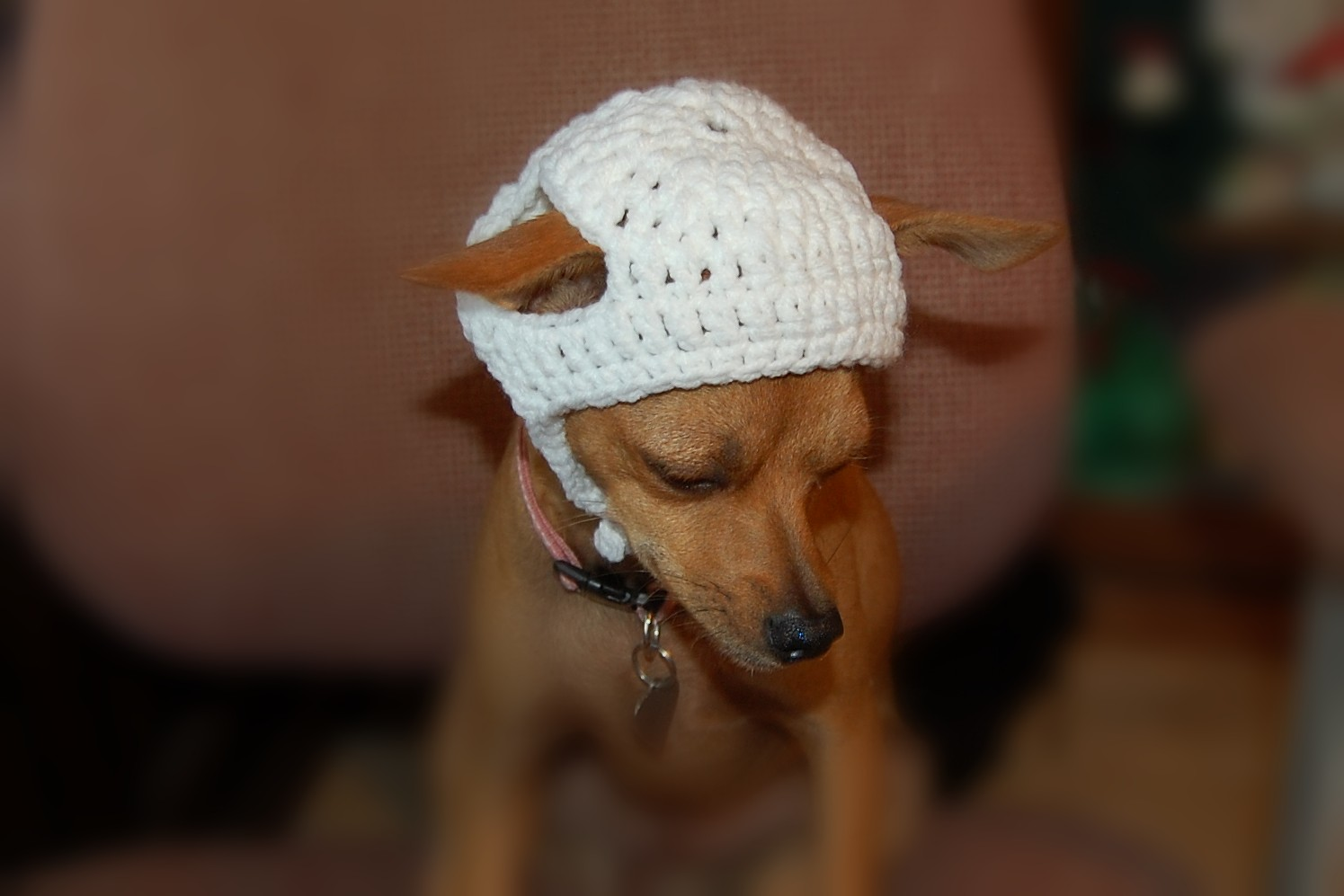Crochet Hat Pattern For A Dog ~ Dancox for .