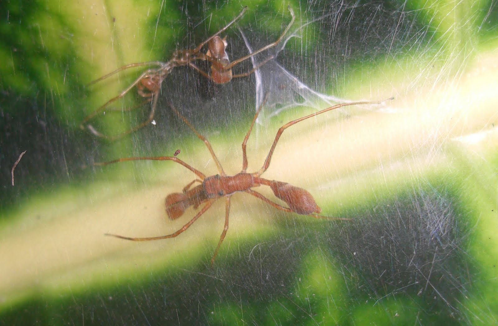 interesting-facts-about-ants