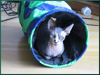 Dragonheart in his tunnel