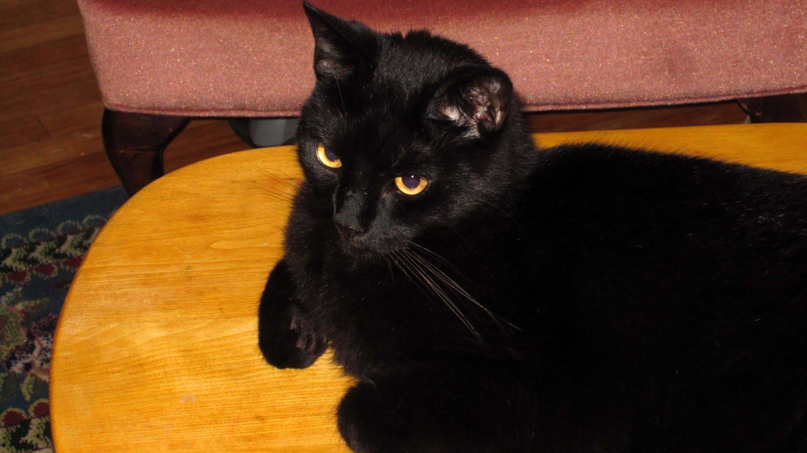 Cat Shakey Eyes