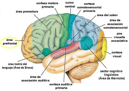 Neuroimagen y lectoescritura