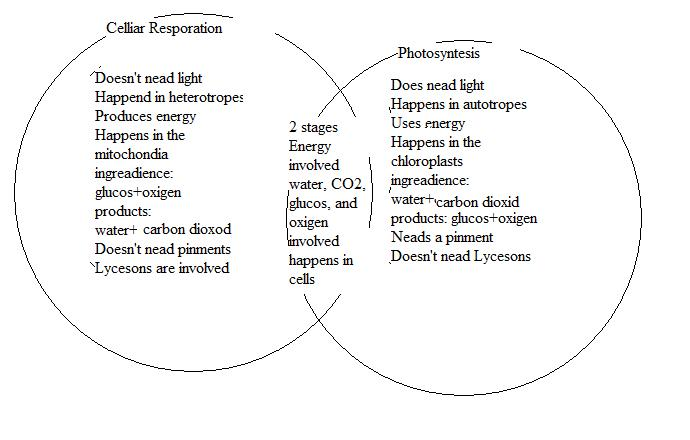 Venn Diagram Comparing Cellular Respiration And Photosynthesis