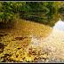 liście lecą z drzew...  (jesień w Planten un Blomen Hamburg)