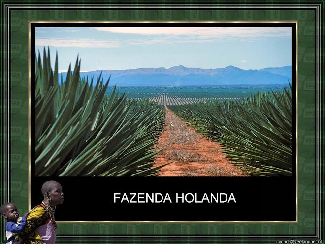 VÍDEO 6 - FAZENDA HOLANDA