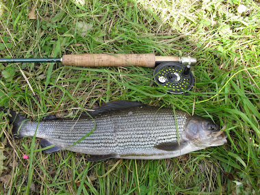 another  grayling from the eden