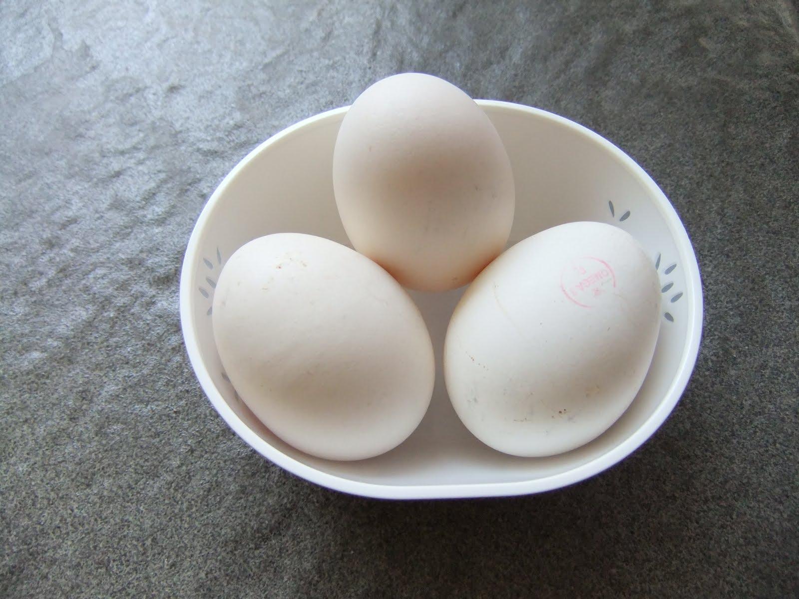 telur ayam jawa keperawanan