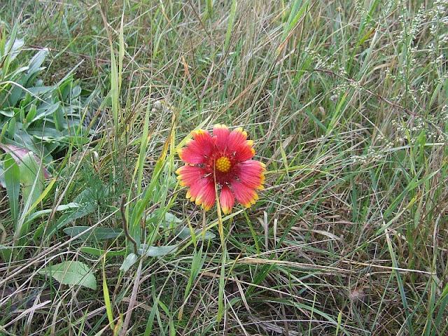 Загадочный цветок