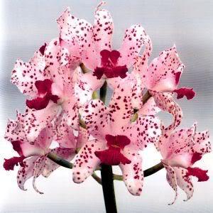 Comprar Orquideas En Home Depot