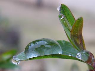 ractually Por qu se juntan las gotas de agua
