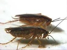 Sin cucarachas - Por donde salen las cucarachas en el cuarto de bano ...