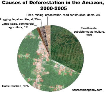 Amazonian Deforestation