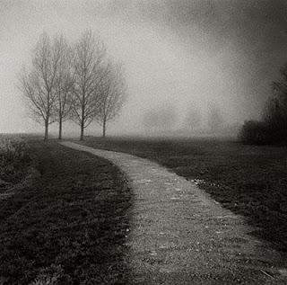 sendero en la oscura neblina