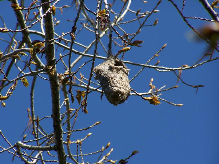 Su nido del año pasado