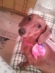 Esta é a Lupyta nossa mascote querida aqui ela havia vindo do SOU PET da minha amiga Renata