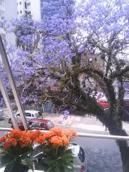 Esta linda árvore eu vejo tdos os dias da janela do meu quarto....LINDA!!!