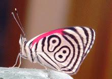 Hermosa mariposa!!!