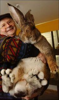 [Image: Giant_Animals_1_6.jpg]