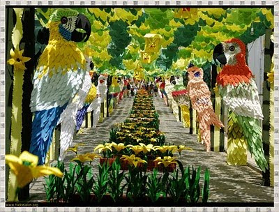 Amazing parrots Picture