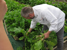 Fiorenzo Pulling Turnips for Lunch